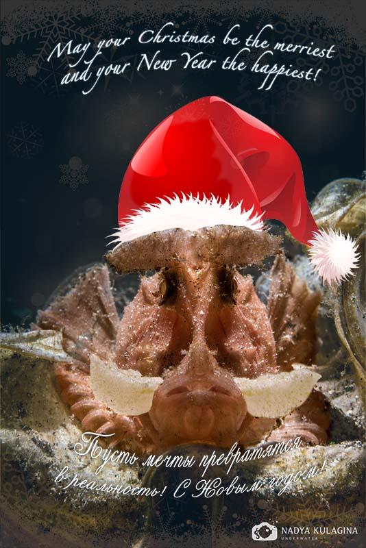 Christmas Card_2014